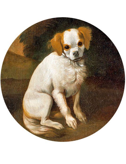 1_tondo cane