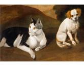Gatto e cane _cartolina postale_535x696